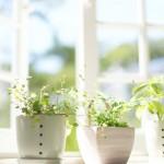 Savjeti za kvalitetniji zrak u vašem domu