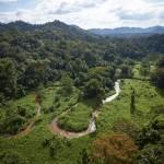 U džungli otkrili ostatke drevne civilizacije
