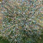 Uskršnje drvo ukrašeno sa čak 10.000 šarenih jaja