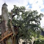 Najstarije drvo u Francuskoj krije kapelu u svom deblu
