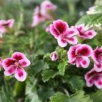 Vanjsko cvijeće koje ne traži previše brige