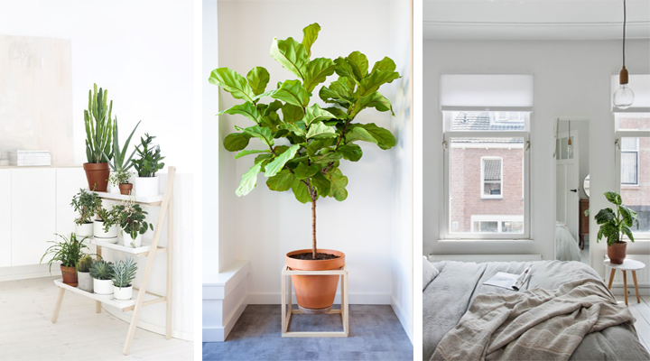 stalak za biljke moderni pijedestal prirodnog dekora dom info. Black Bedroom Furniture Sets. Home Design Ideas