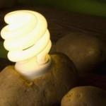 Prirodna baterija: Pomoću krompira osvjetlite sobu!