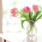 Kako održati svježinu tulipana