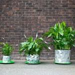 Origami saksija koja raste zajedno sa biljkama