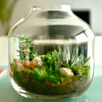 Mikrovrtovi: Za prezaposlene i urbane vrtlare