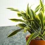 Rješenja koja će uvenule sobne biljke vratiti u život
