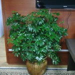 Zimska njega biljaka