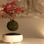 Japanci izumili lebdeća bonsai drvca