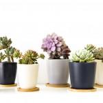 Biljke koje ne zahtijevaju puno brige, a izgledaju efektno