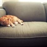 Najlakša rješenja za uklanjanje životinjske dlake sa kauča i tepiha