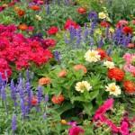 Sezonskim cvijećem do šarenog vrta