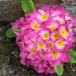 Održavanje vrta: Pet koraka proljećnog uređenja