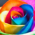 Ovo je službeno najbolji spoj boja na svijetu