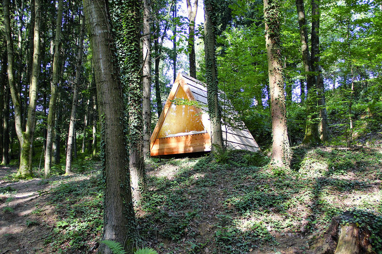 lushna_glamping_massive_wooden_cabin_pod_forest1