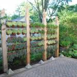 Uređenje dvorišta: Biljkama do privatnosti