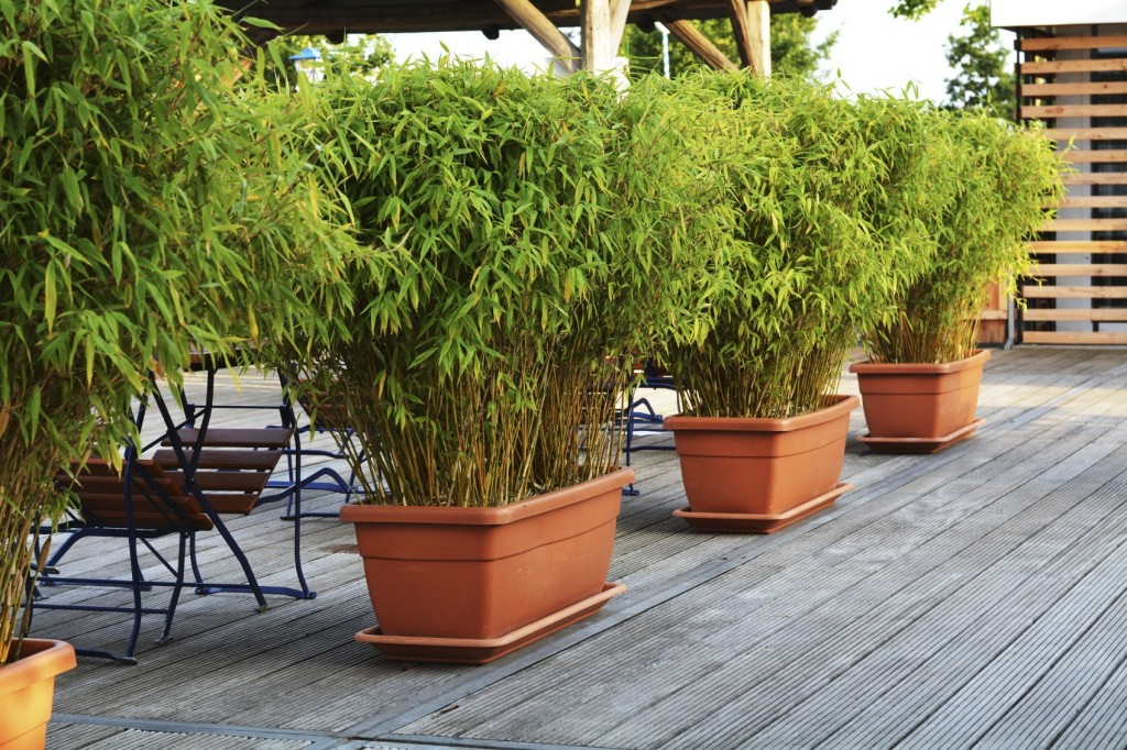 bamboo-pots