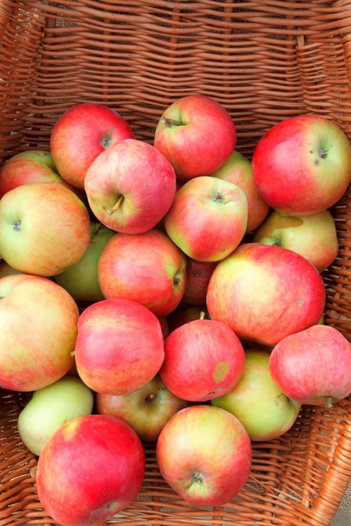 idared-jabuka