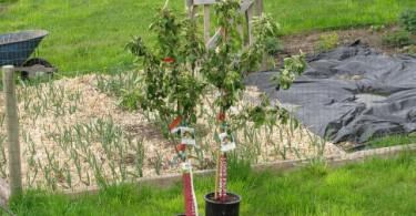 kako-saditi-vocke-u-jesen