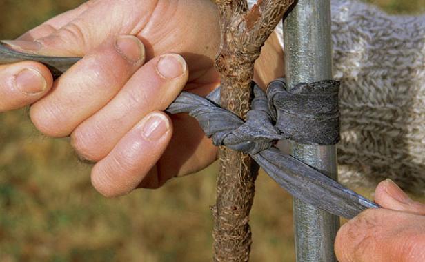 sadjenje-vocaka-u-jesen
