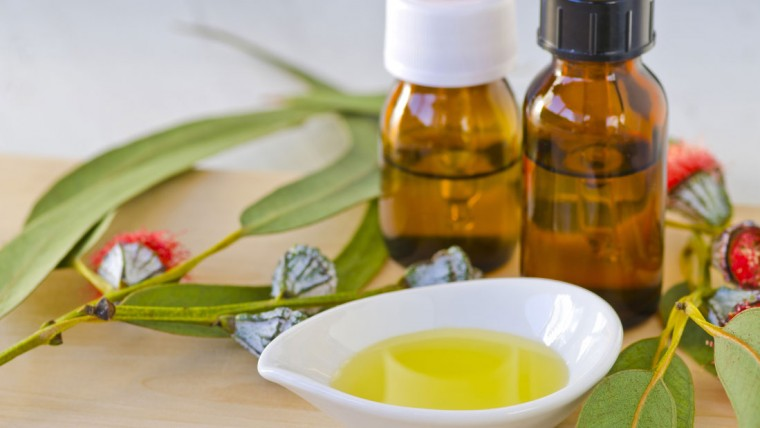 ulje-cajevca-i-eukaliptusa