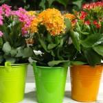 5 biljaka koje isušuju i ovlažuju životni prostor