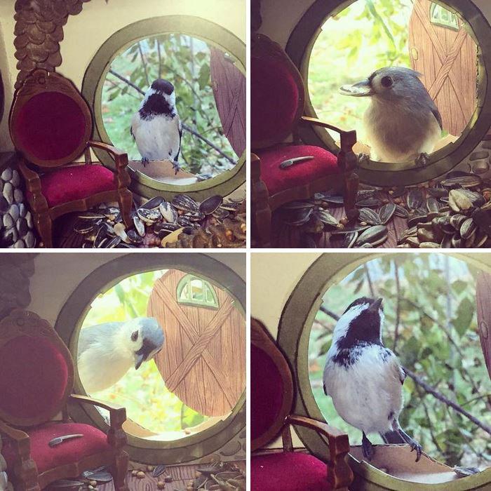 kucice-za-pticice