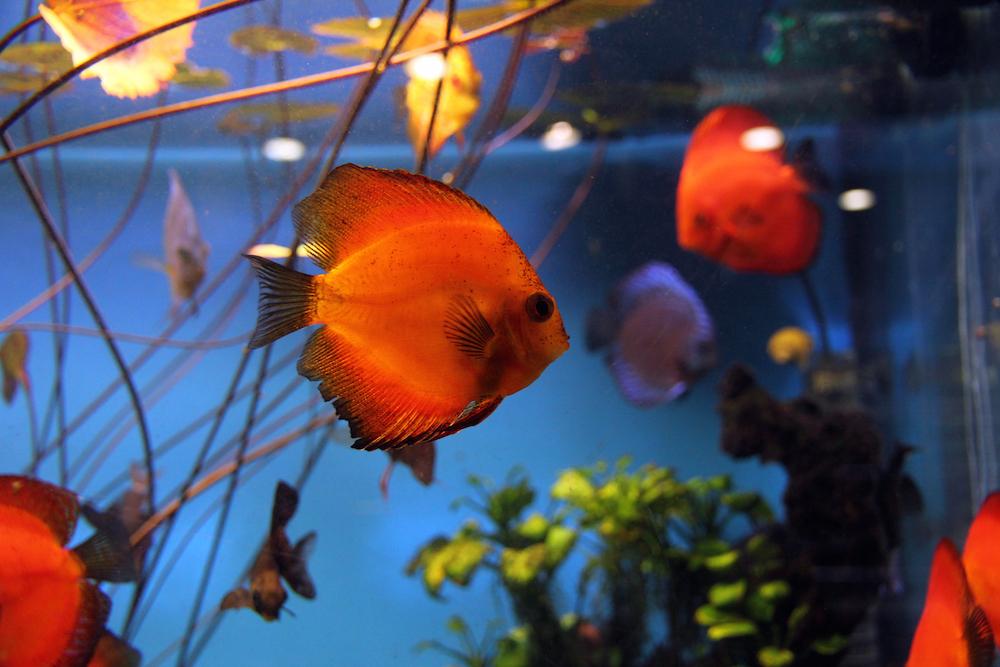 akvarij-s-ribicama