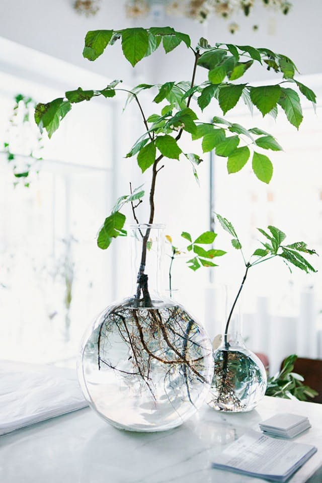 hidroponski-uzgoj-biljaka-2