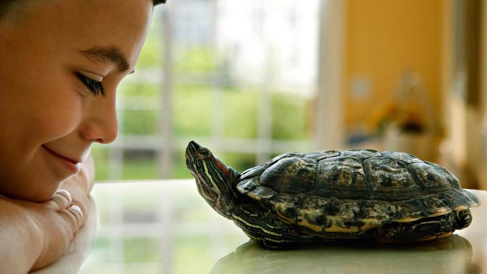kornjace-kao-kucni-ljubimci