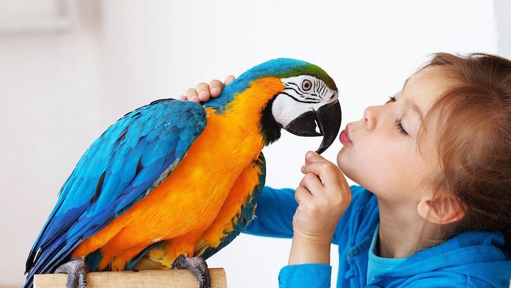 ptice-kucni-ljubimci