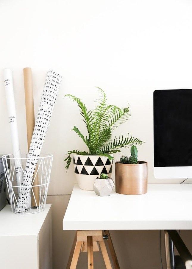 biljke za kancelariju