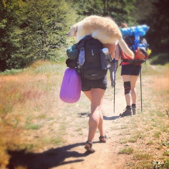 kampovanje pas