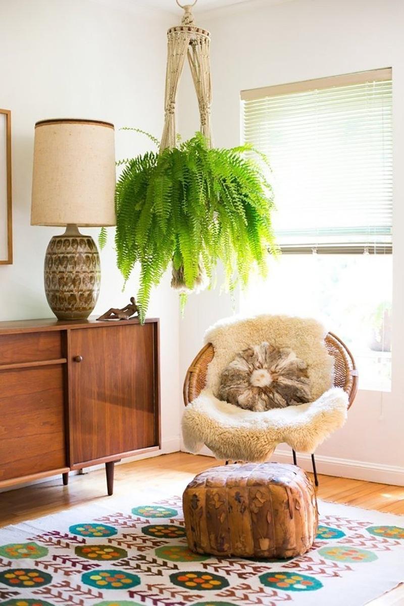 najbolje biljke za stan