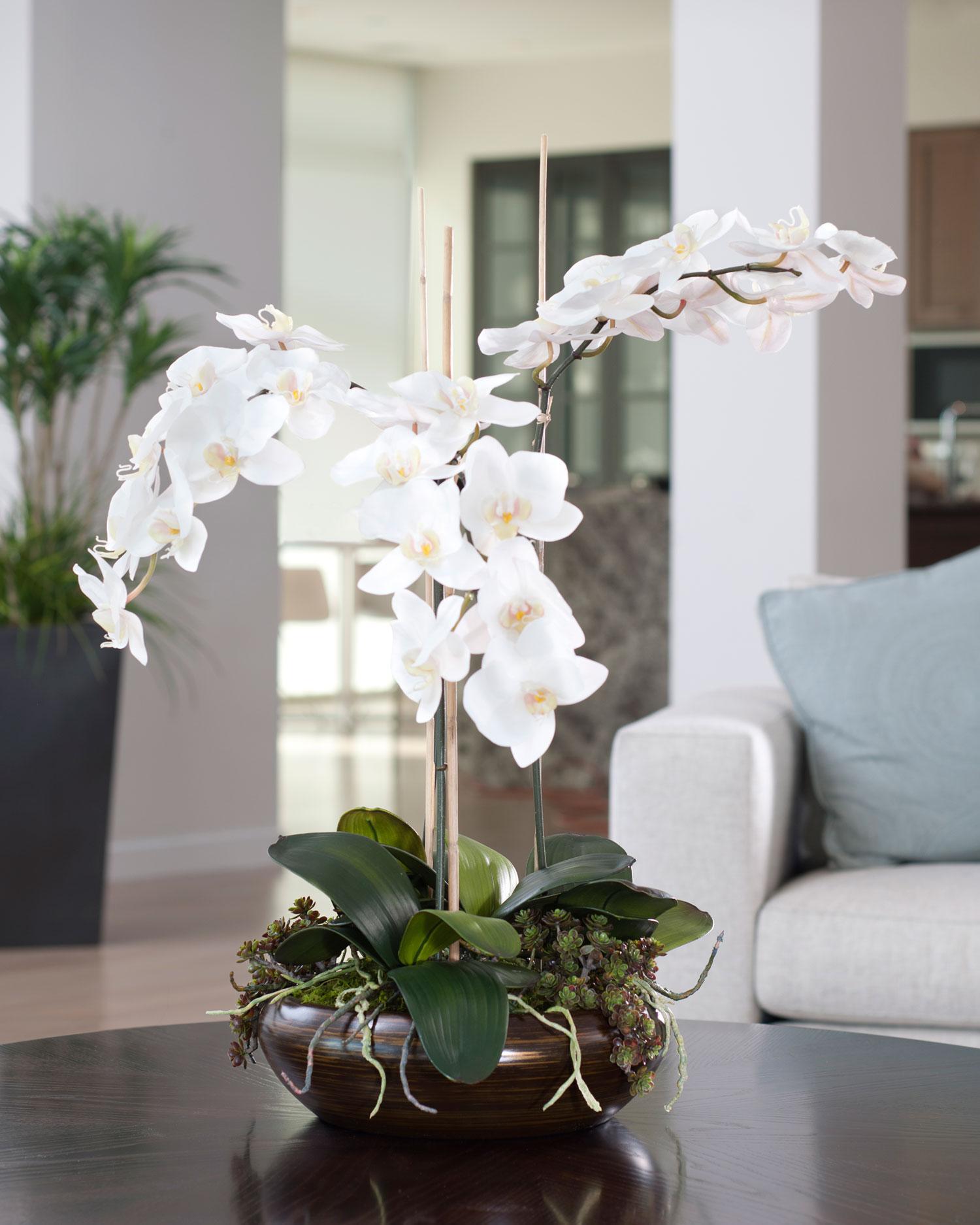 orhideja kucno cvijece koje donosi srecu