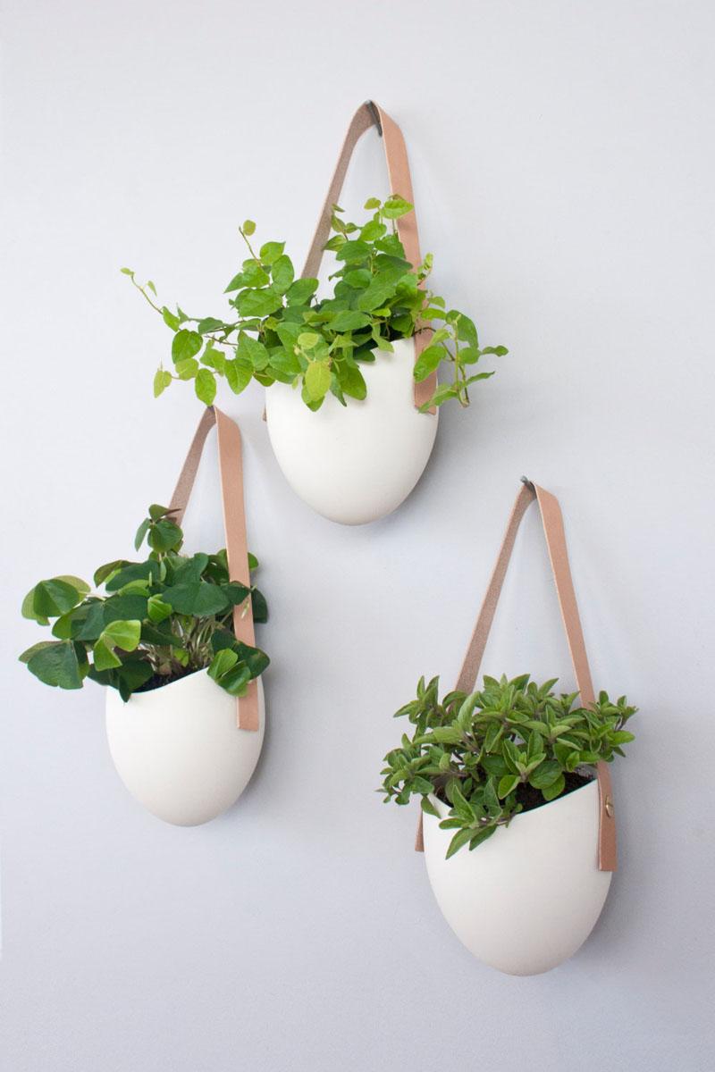 biljke na zidu
