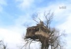 kuca na drvetu panta pirot