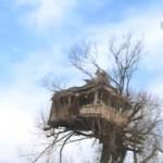 Piroćanac napravio dom na drvetu