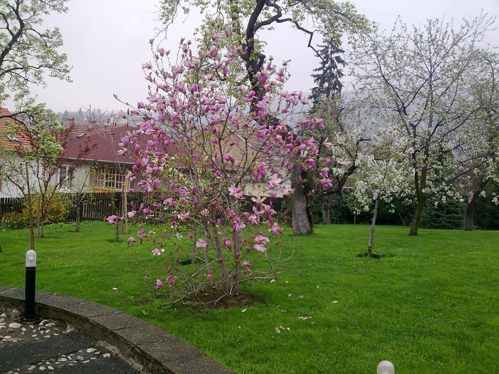 Biljke koje cvijetaji u u rano proljece orezujemo nakon cvijetanja