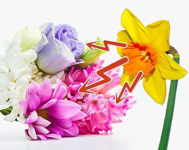 aranziranje cvijeca