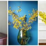 Žuti cvjetovi forzicije kao idealan proljećni dekor