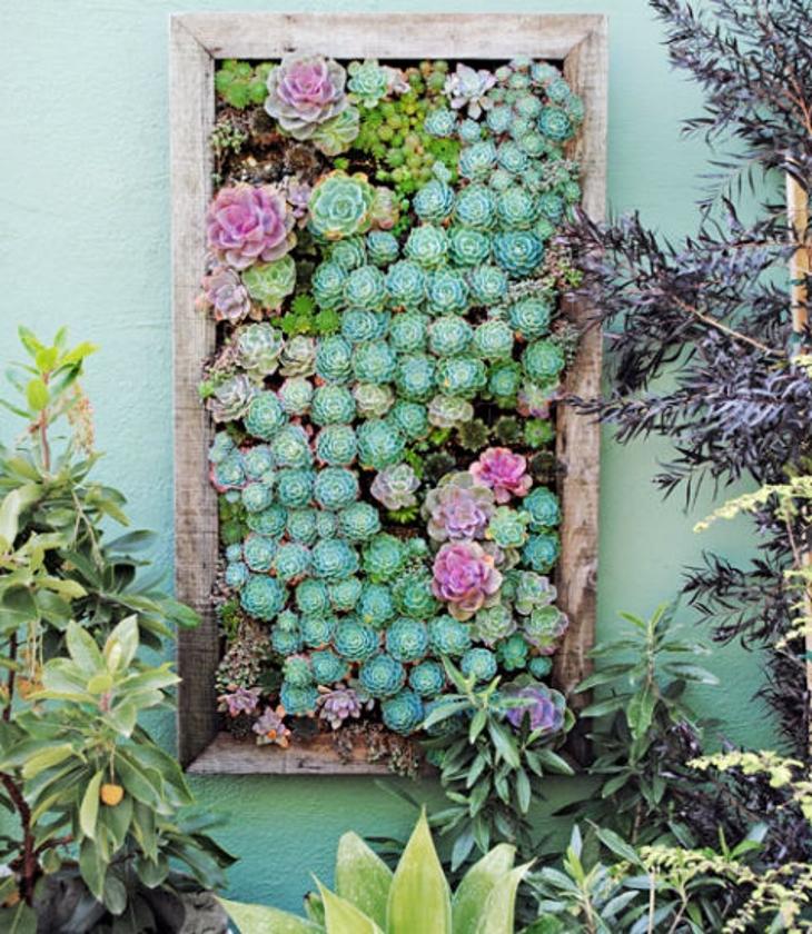 sukulenti vertiklani vrt