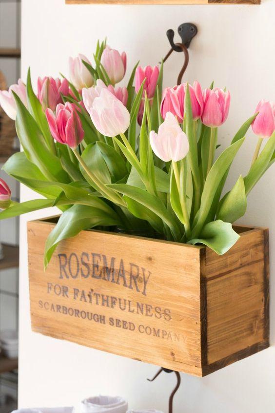 tulipani uzgoj