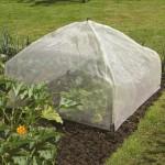 Kako zaštiti biljke od mraza?