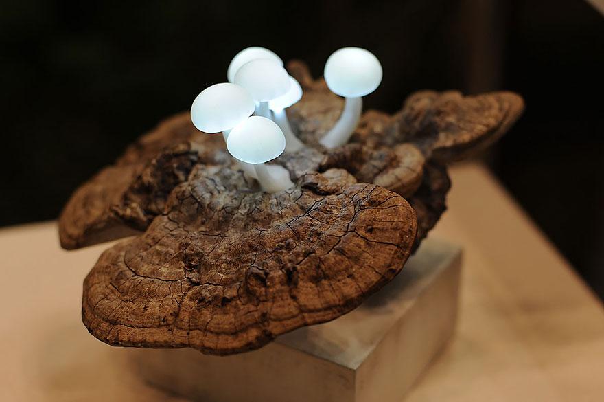 gljiva lampa