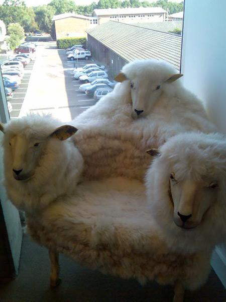 stolica ovca