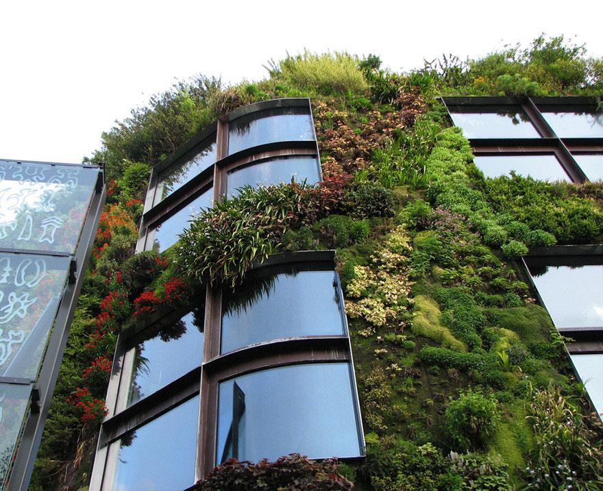 zelena fasada 2