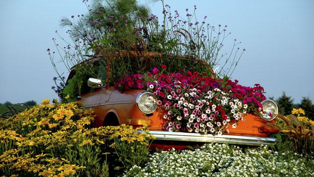 guerilla_gardening