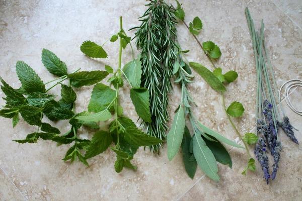 biljke u kadi