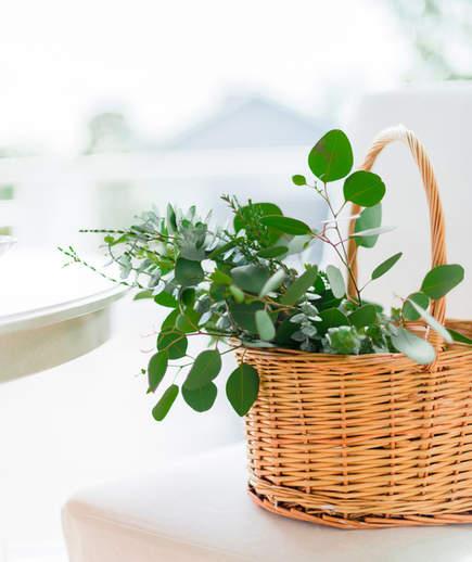 Eucalyptus leaves in a basket